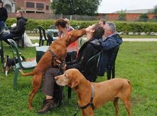 Hondenwandeling 15/09/2013